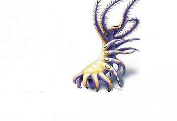 Makhluk Laut Supertua Ditemukan